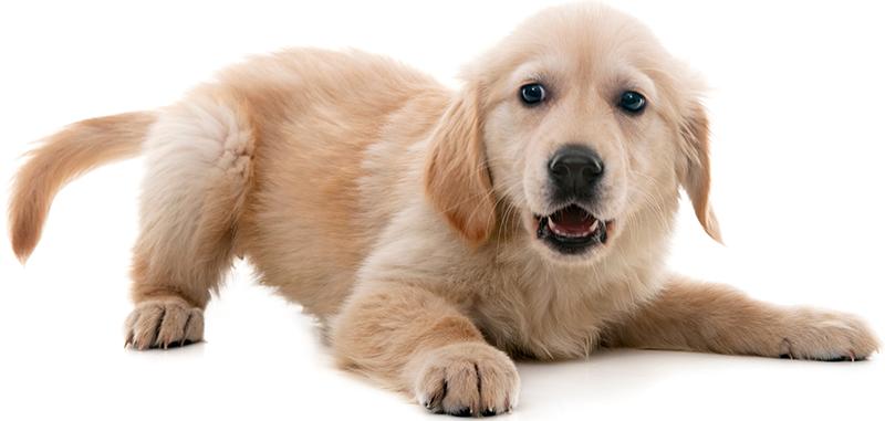 Dog crouching: Wellness Care in Austin