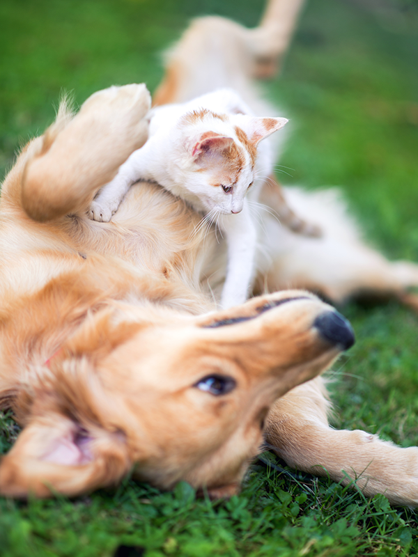 Dog and kitten in grass: Wellness Care in Austin