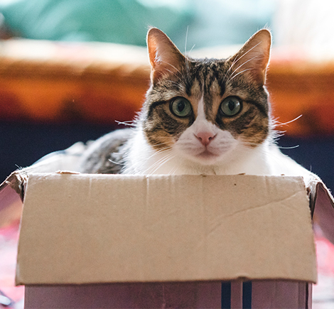cat-inside-cardboard-box