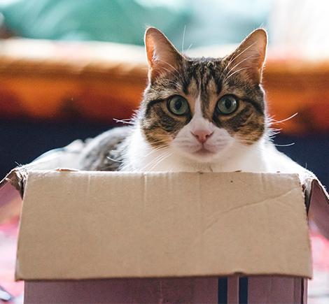 cat-inside-cardboard-box
