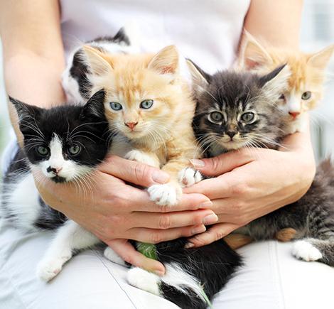 five-kittens-in-womans-lap