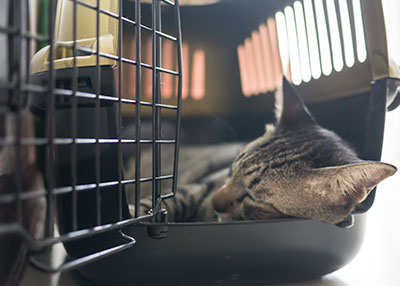 Cat in carrier: Pet Surgery in Austin