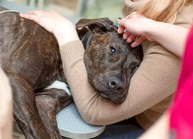 Perro siendo reconfortado: Ultrasonido para mascotas en Austin