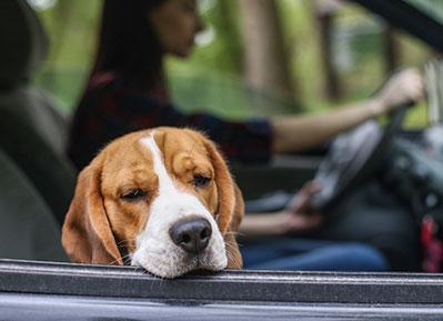 Sick dog in car: Emergency Pet Care in Austin